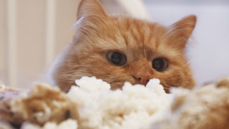 Can Cats Eat Rice Is Rice Safe For Cats Cute Cats Photos Cat Facts Cats
