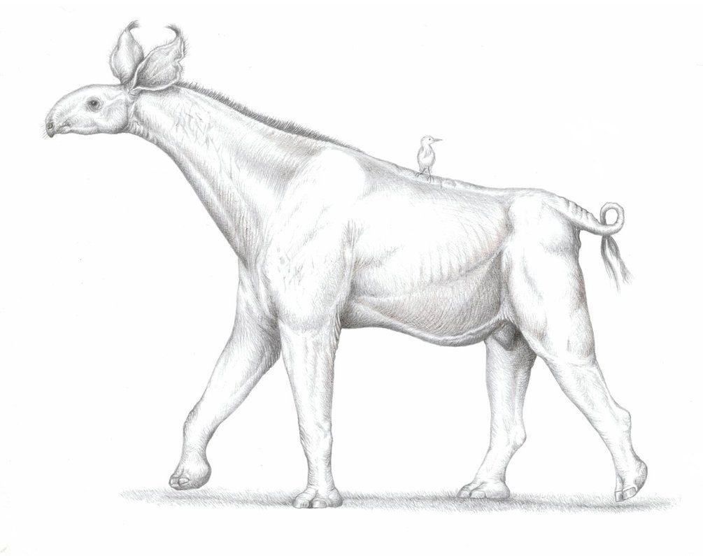 Paraceratherium (Indricotherium) by PanZareta.deviantart ...