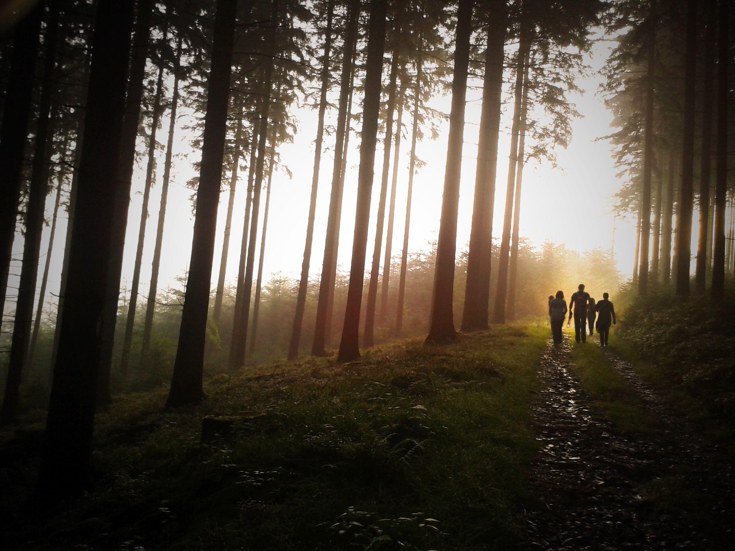 если так картинки леса как в сумерках что душа