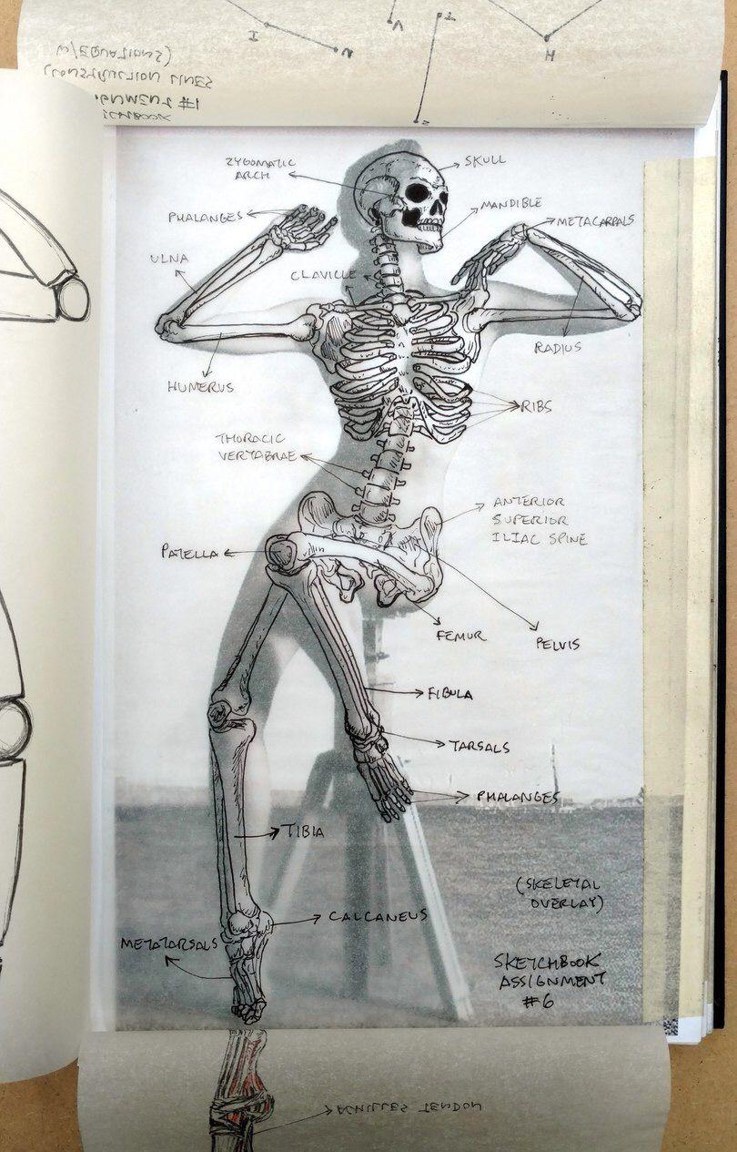 Pin de Siarell en Anatomy | Pinterest | Herramientas y Crear