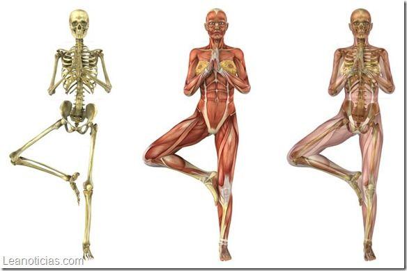 Conoce lo que probablemente no sabías de la anatomía humana ...