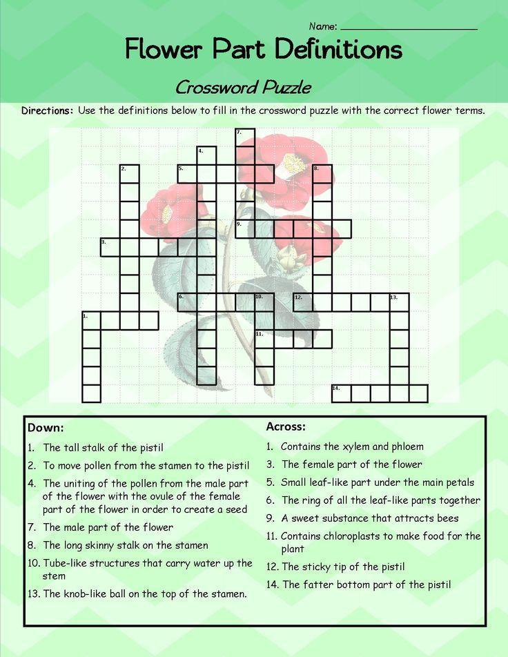 Parts Of A Flower Crossword Puzzle Worksheet FREEBIE