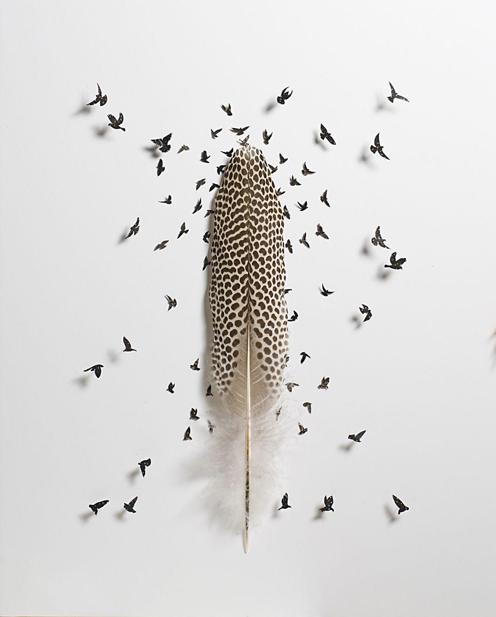 Art avec des plumes d oiseaux chris maynard plumes pinterest plumes couleur taupe et taupe - Signification des plumes d oiseaux ...