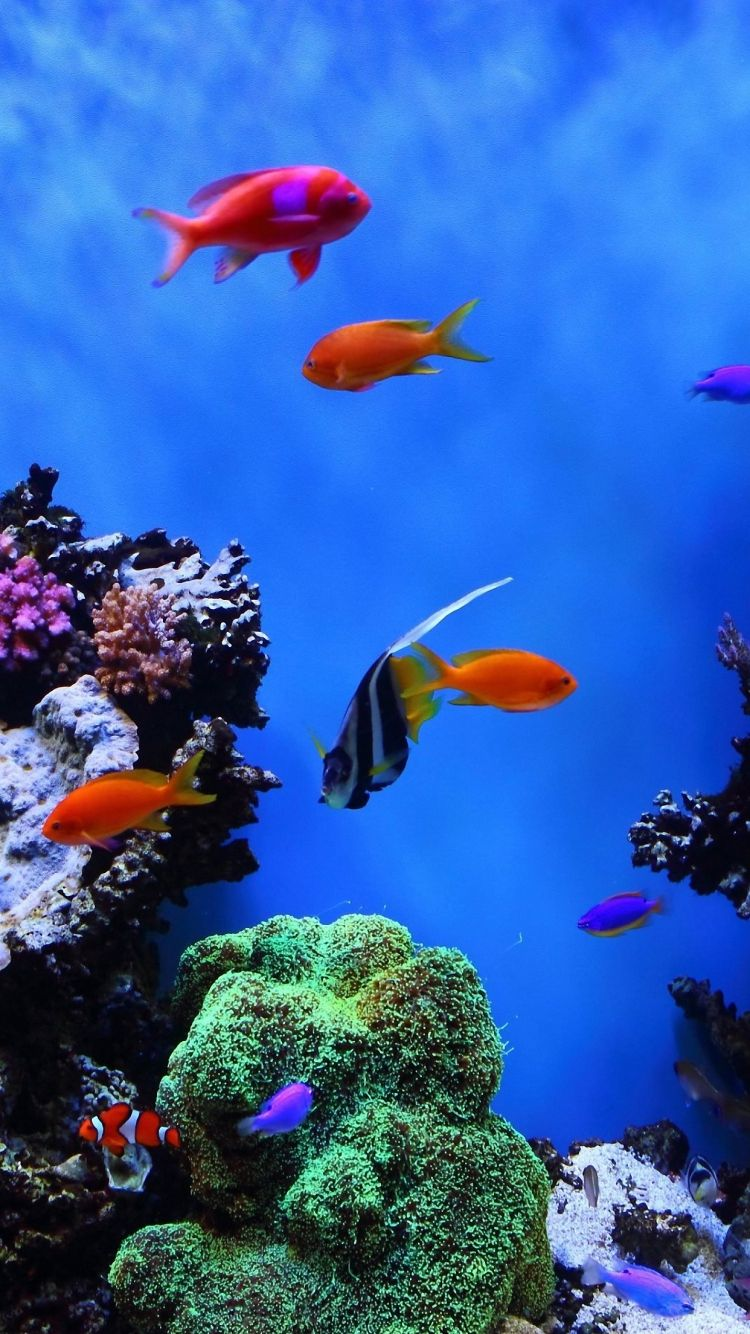 Hd 750x1334 Tropical Fish Undersea Iphone 6 Wallpapers Acquario