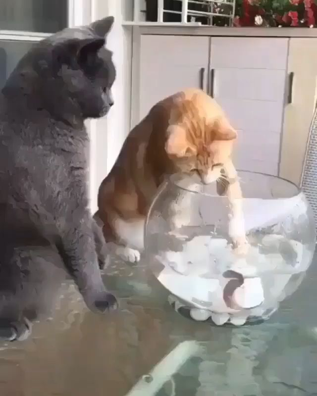 Latest Funny Pets What did this remind you off #catlovers #cats #viralvideo #siblings #funny #catfight #viralmash 11