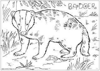 Badgers Coloring Pages Badger British Wildlife