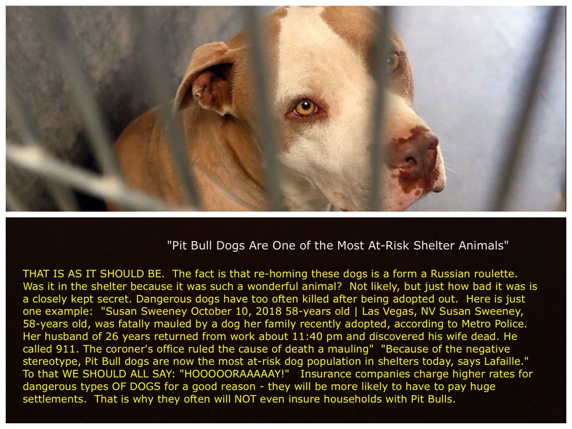 Pin by Lenore Smathers on Breed Specific Legislation YES