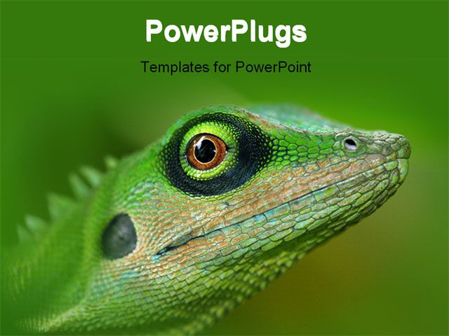 PowerPoint Template Displaying Close-up of Green Tree Lizard on - new jungle powerpoint template