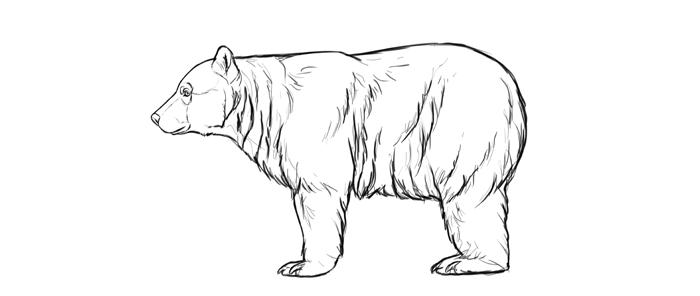 Sketchbook Original How To Draw Bears Monika Zagrobelna In 2021 Bear Drawing Sketch Book Drawings