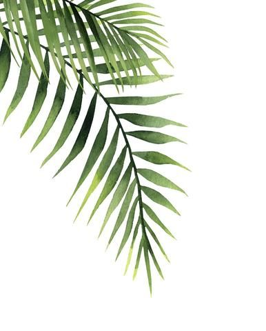 Palm Palm Trees Painting Palm Tree Drawing Plant Painting