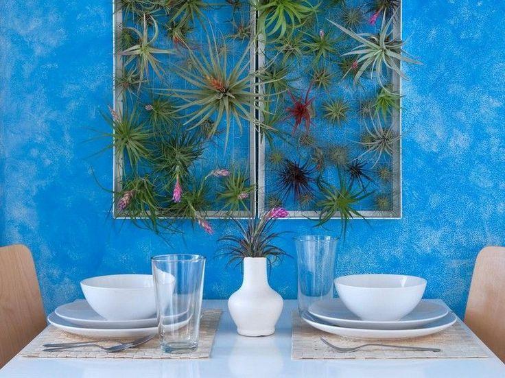 Idée Décoration Maison En Photos 2018 \u2013 plantes épiphytes et plantes