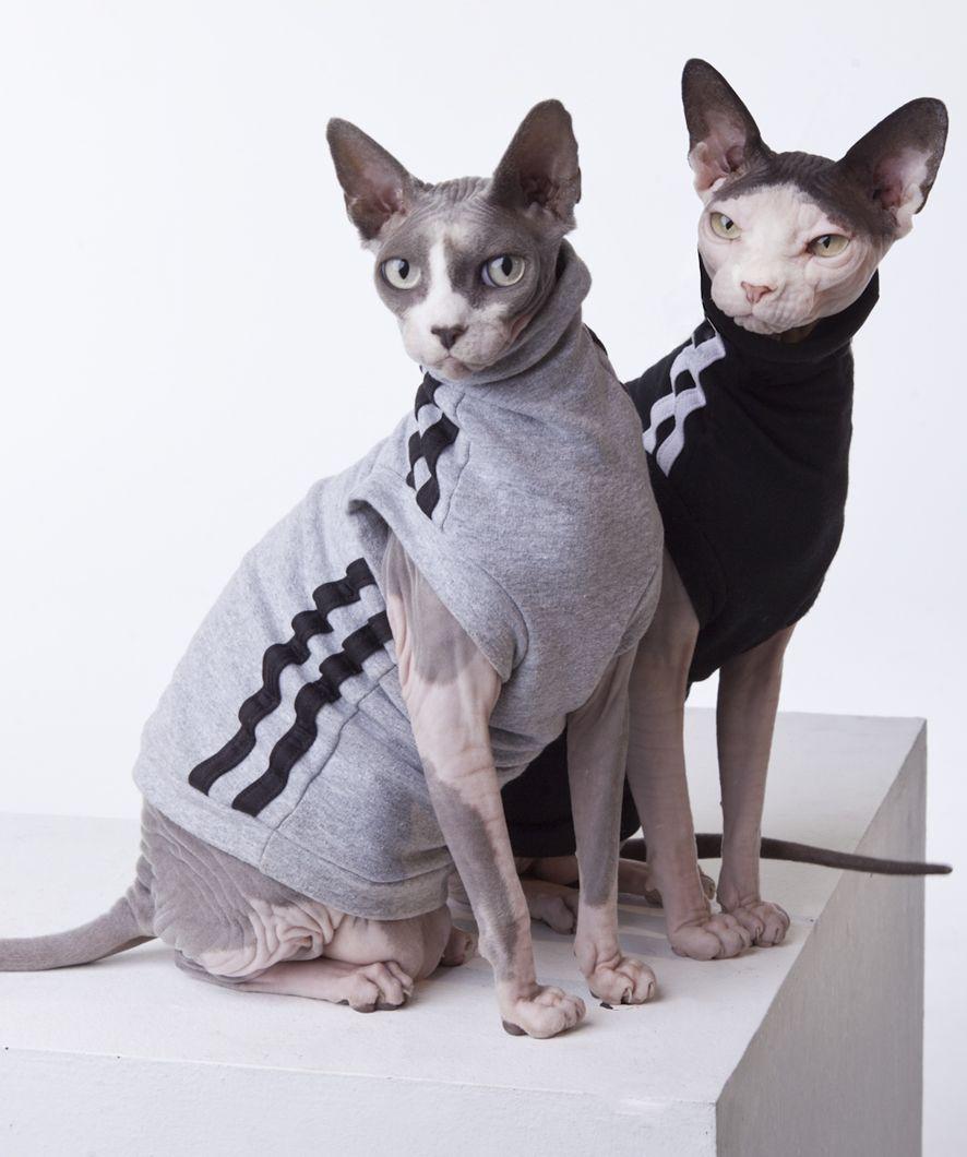 sphynx cat wear the original sphynx clothing company