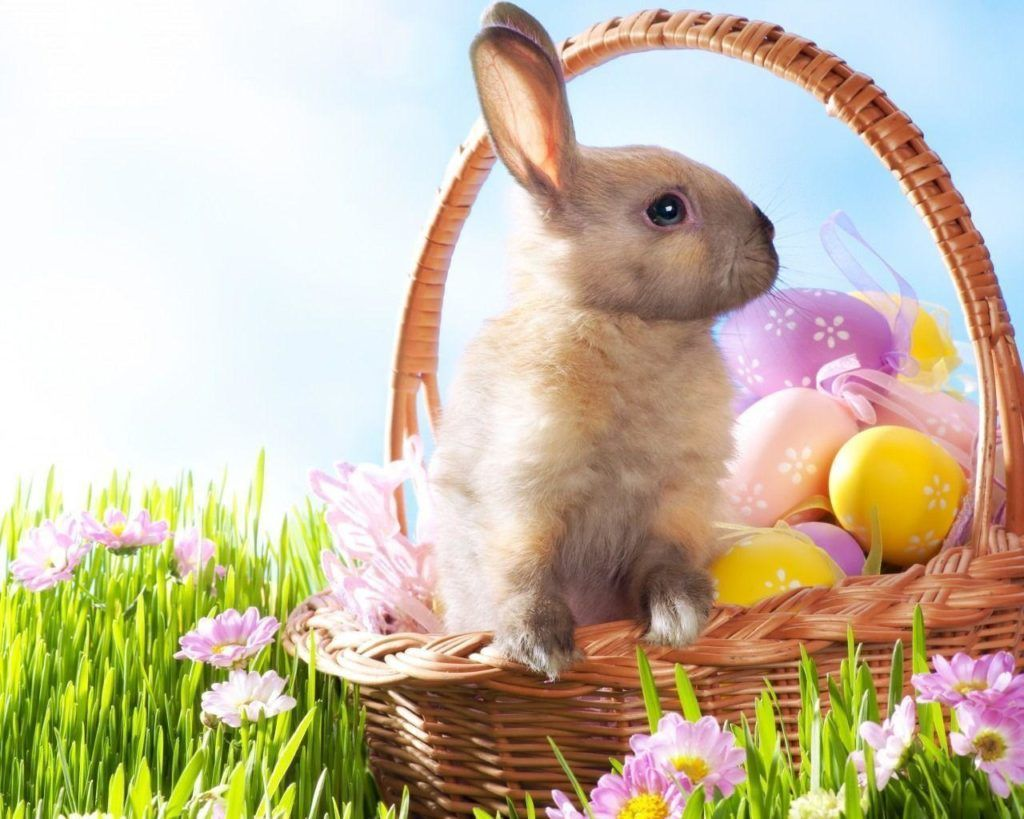Best Easter Bunny Images 2019 Stunning Happy Easter Images 2019 Easter Happy Eastereggs Easte Easter Wallpaper Easter Bunny Pictures Easter Bunny History
