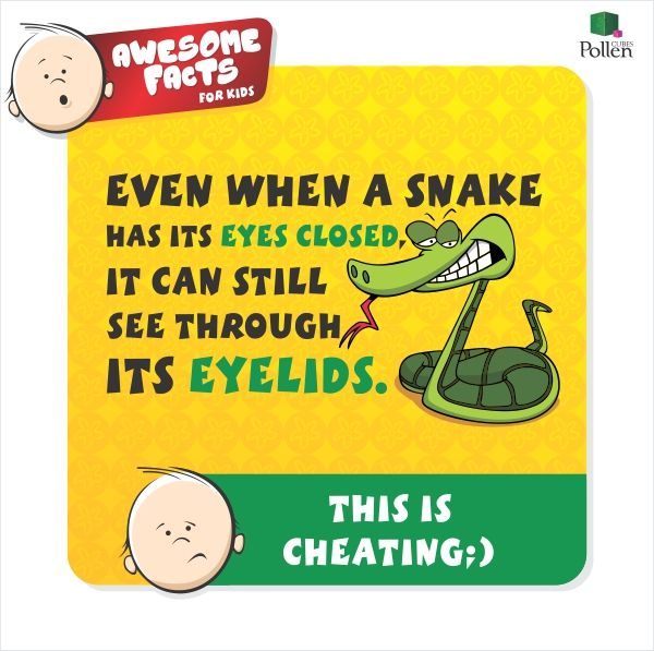 Sizzling Snake Fact  Fun Facts, How To Memorize Things -6942