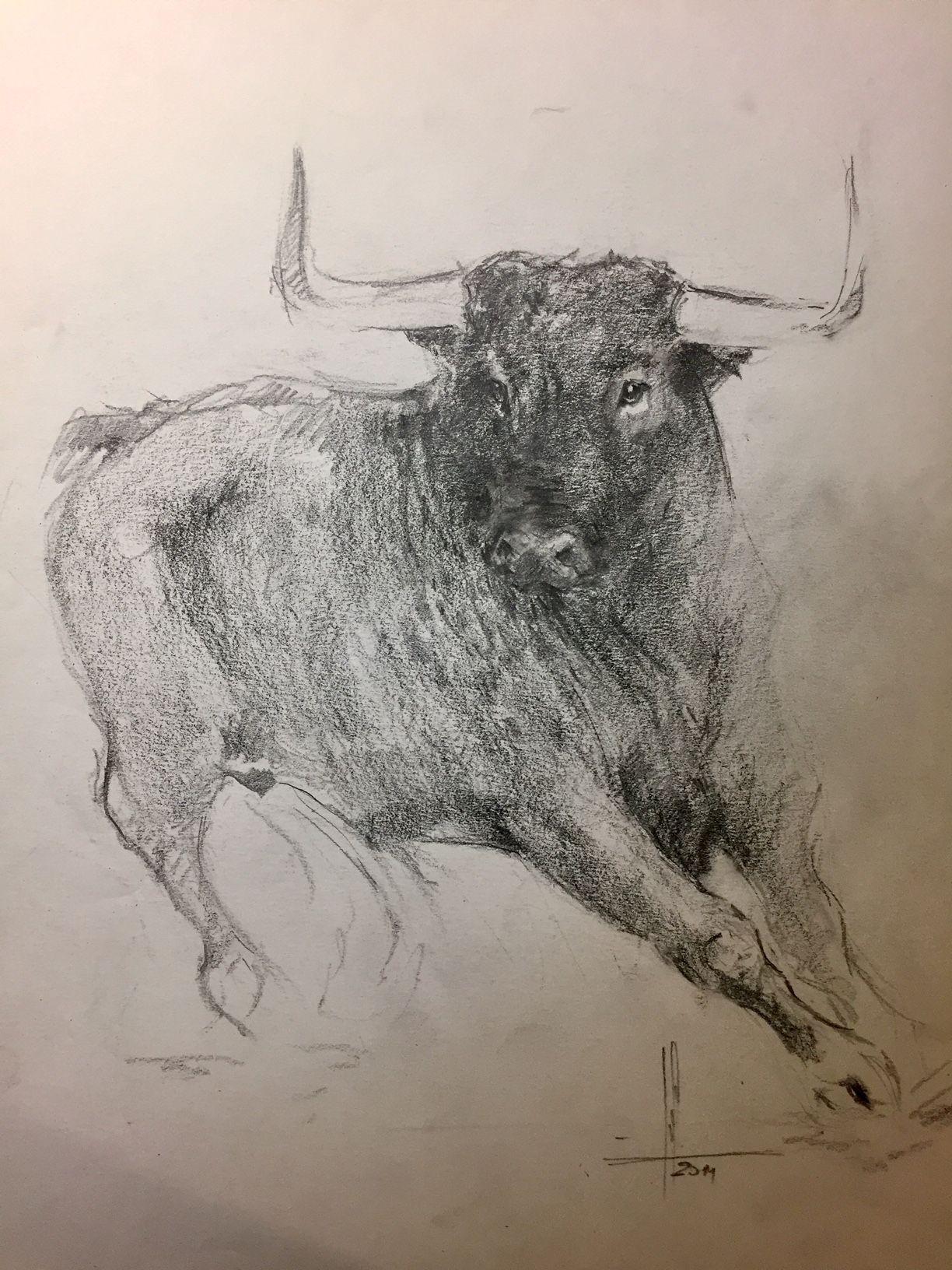 Dibujo Toro Bravo A Lápiz Por Francisco Javier Abellán Dibujos Y