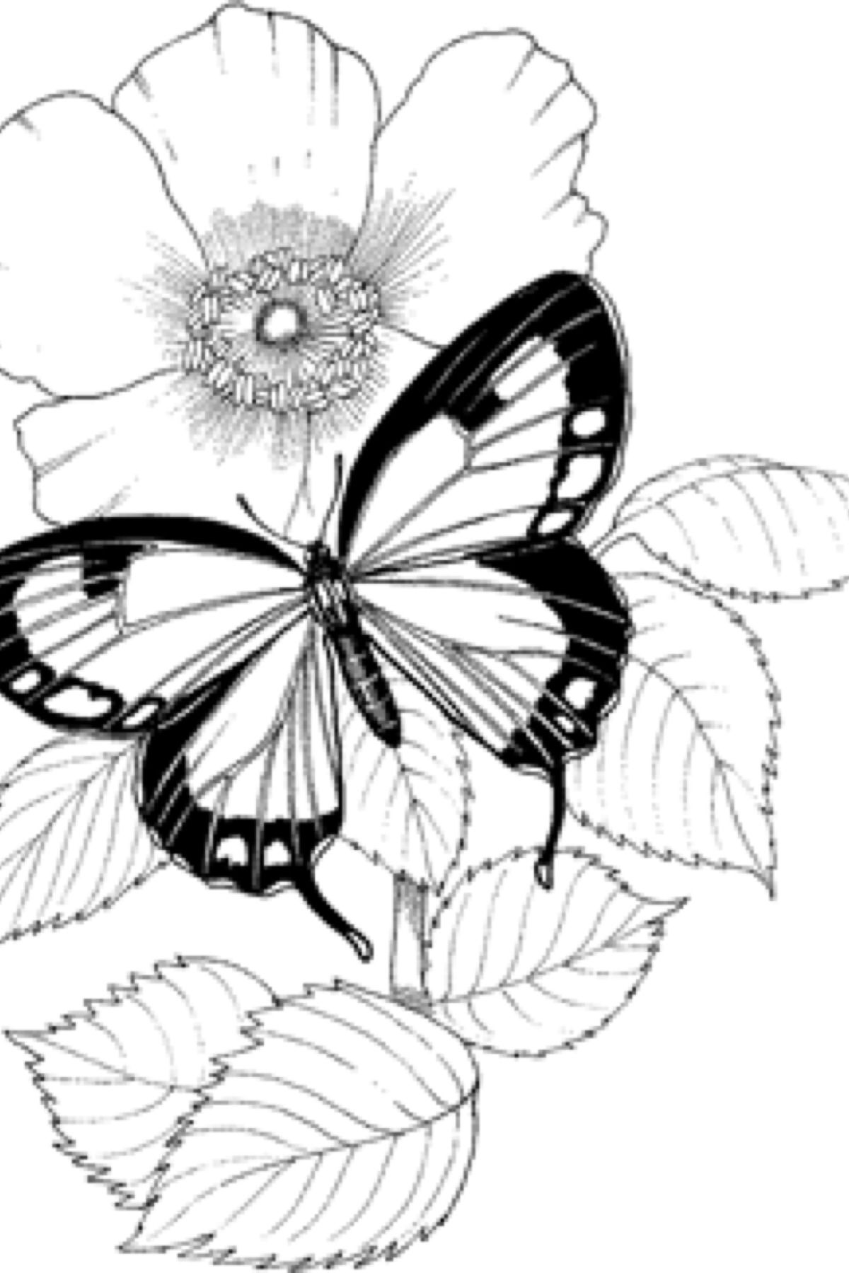Pin On Coloring Designs