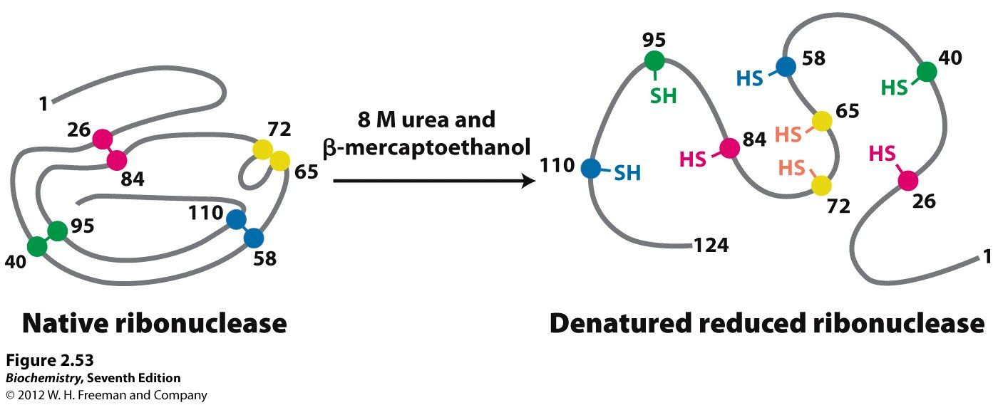 guanidinium hcl also used to disrupt h bonds in protein denaturation