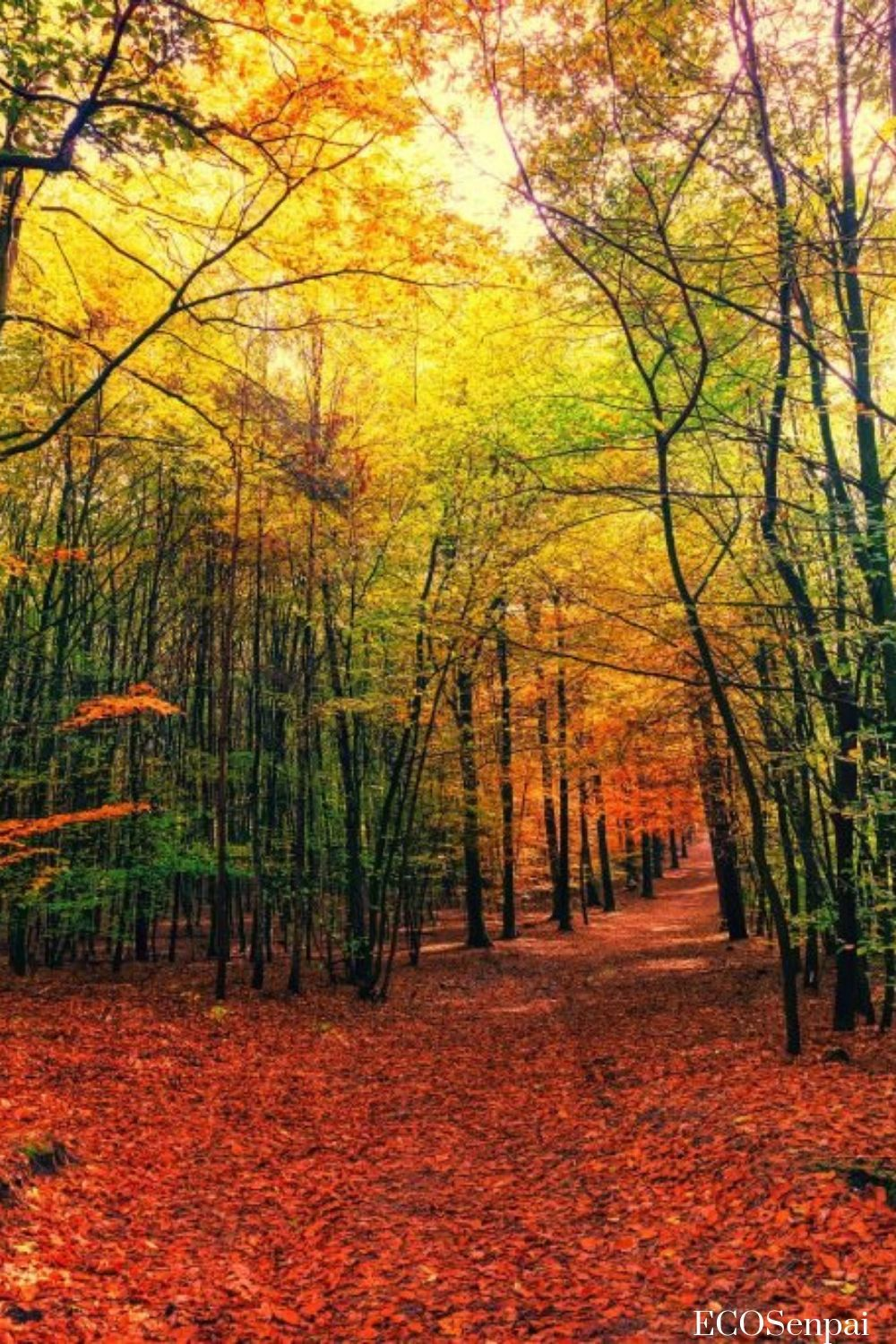 Nature Amazing Photo And Beautiful Scenery Awesome Autumn Color Wild Forest Landsca Best Nature Wallpapers Nature Backgrounds Iphone Nature Photography Trees