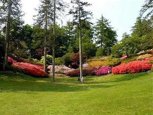 jardines en inglaterra - Buscar con Google Plantas, flores