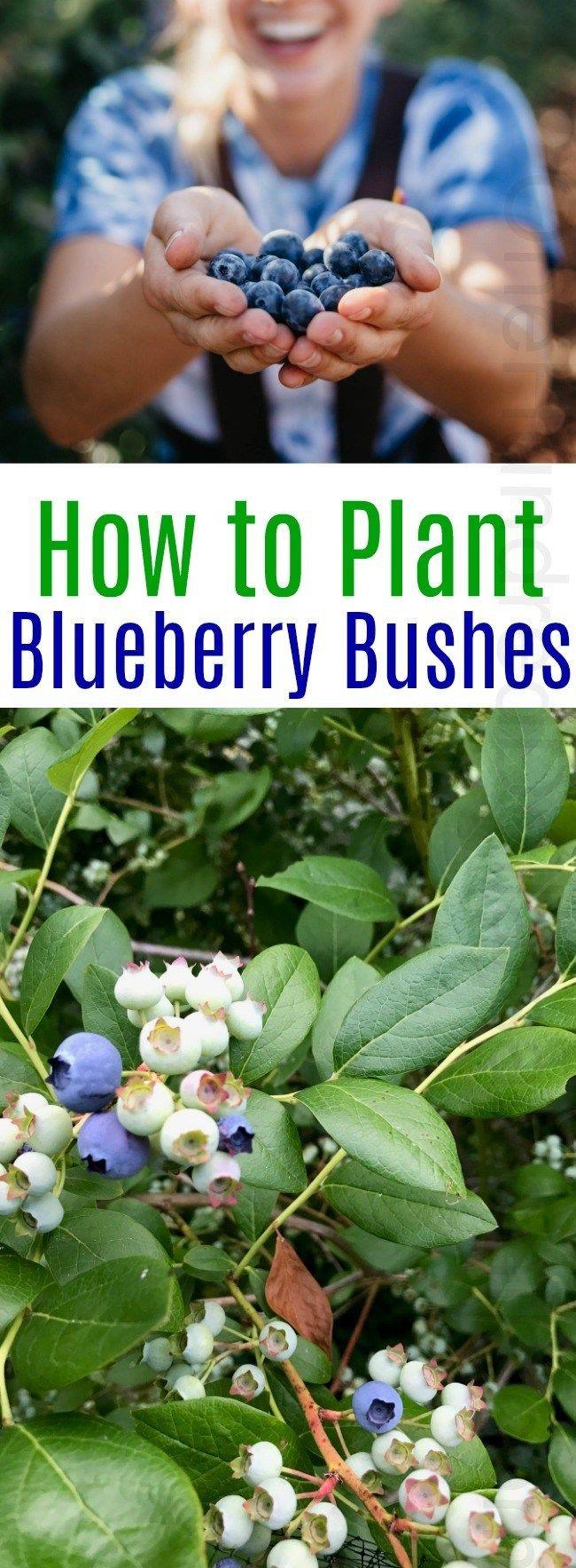 13 planting healthy ideas