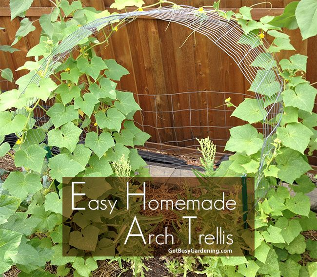Cucumber Trellis DIY: How To Make A Simple Cucumber Arch Trellis