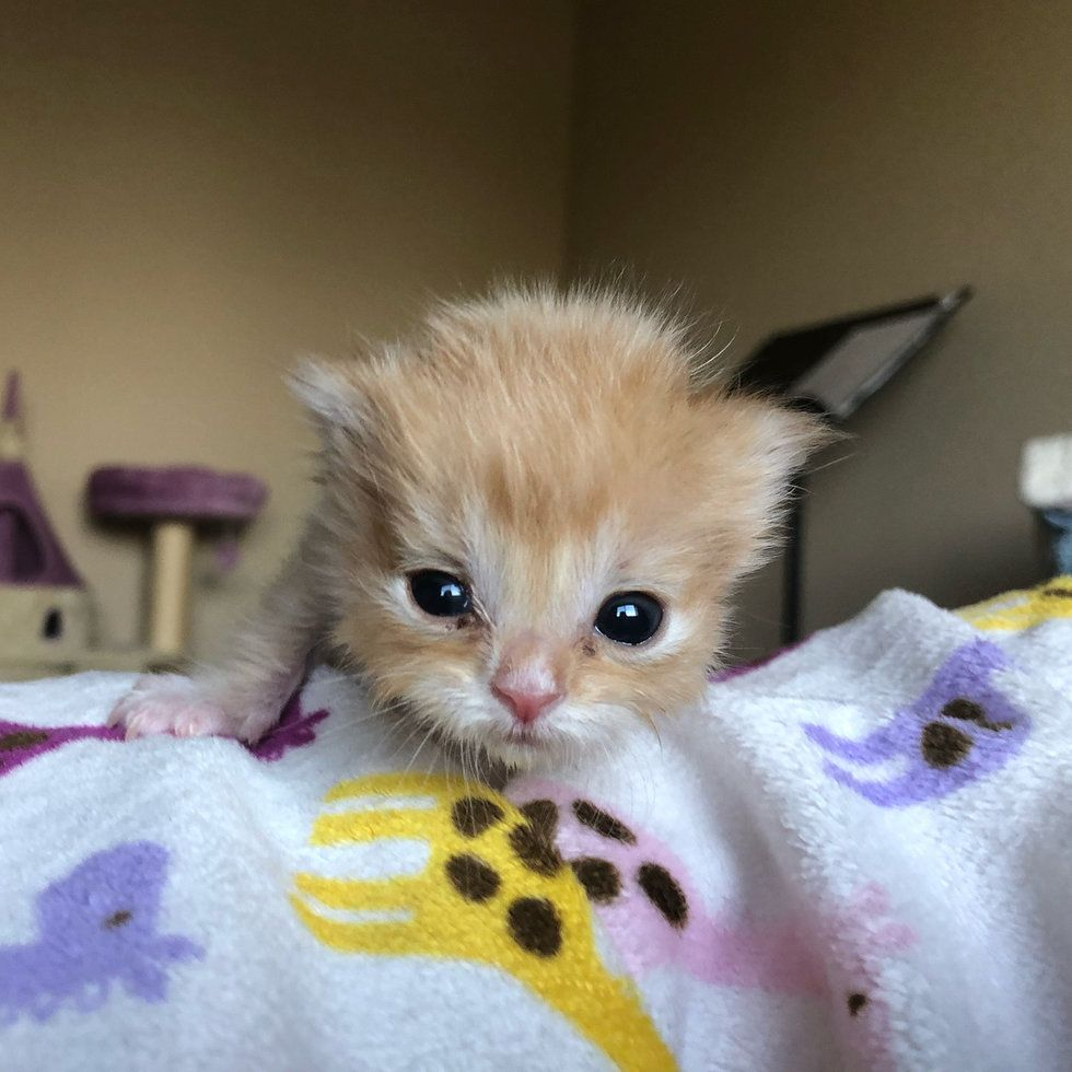 Pin By Silvina R On Baby Animals Kittens Cutest Baby Animals Kittens