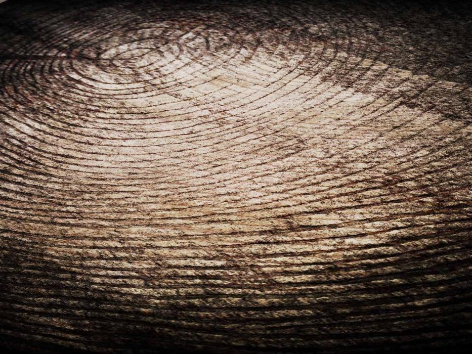 eco #Questo tappeto rappresenta la sezione di un tronco, un tappeto stupendo adattabile ad ogni situazione. È realizzato a 10mm di altezza e poi intagliato a mano. http://nodusrug.it/it/collezione_tappeti_scheda.php?ID=EENN