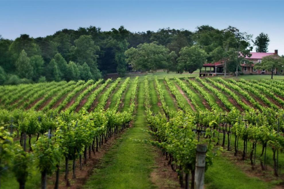 North Carolina Vinyard Rows Historic Winery & Brewhouse