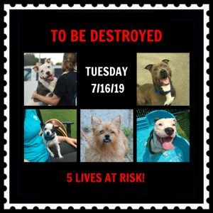 DOGS TO BE DESTROYED 07/16/19 | Dogs, Dog rocks, Rescue dogs