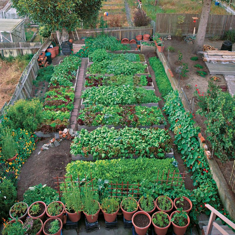 Productive garden on a small urban lot vegetablegardener for Compact vegetable garden ideas