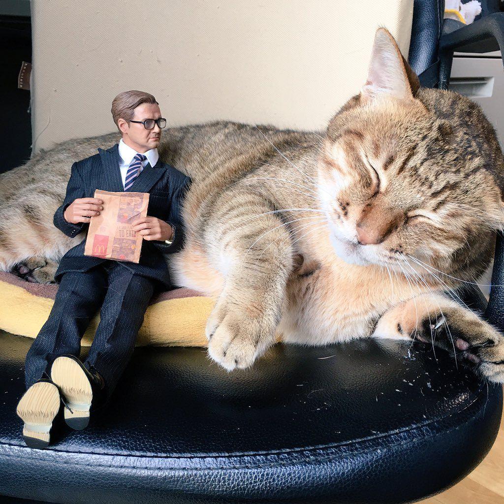 """ハマジ on Twitter: """"キングスマンのハリー・ハート人形、実は買ってたんですよね https://t.co/zBNuOhhAeC"""""""