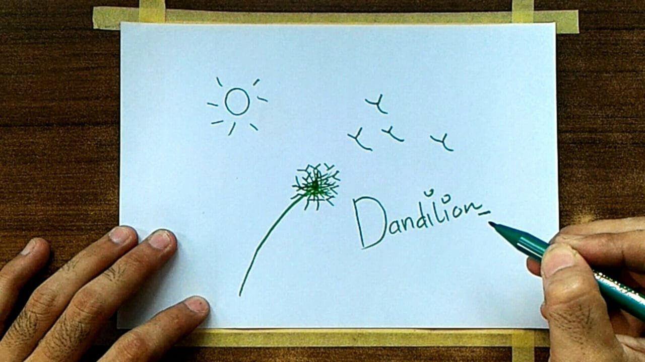 Cara mudah menggambar dan mewarnai bunga dandilion
