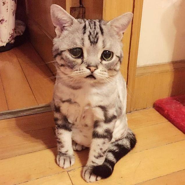 리그오브레전드 인벤 혼란한 와중에 냥이짤 오픈이슈갤러리 고양이 Animals