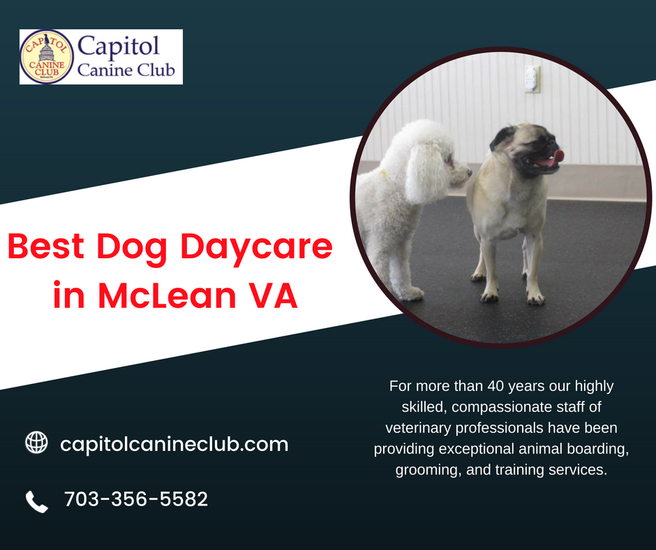 Capitol Canine Club Offers You High Quality Pet Grooming Boarding And Training Services For Dog Daycare Or Dog Boarding In Mc Dog Daycare Pet Boarding Canine