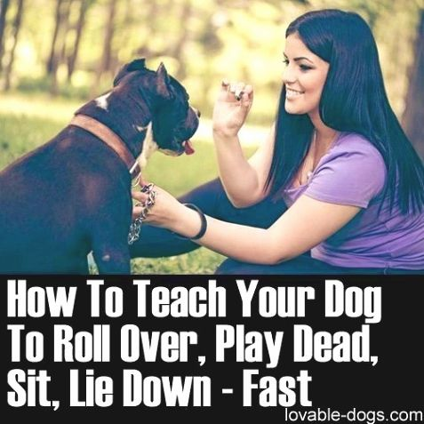 Dog Training Guide Discourage Any Bad Behavior That Happens When