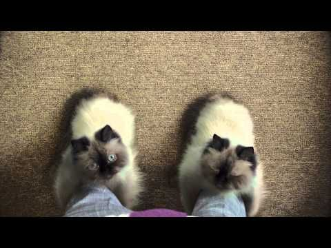 Temptations Tv Commercial Boots 30 Sec Cute Animal Photos Funny Prank Videos Cute Creatures