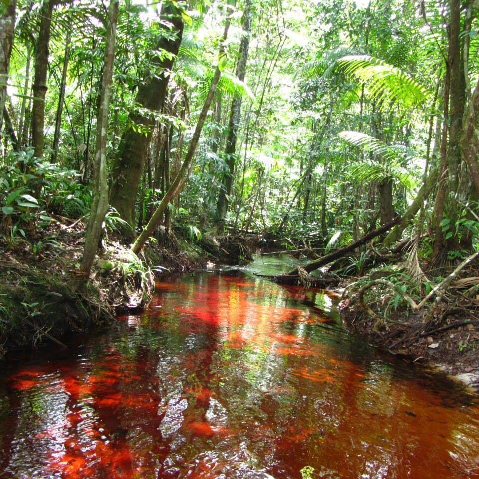 Blaka Watra Suriname Reizen Zuid Amerika Cultuur
