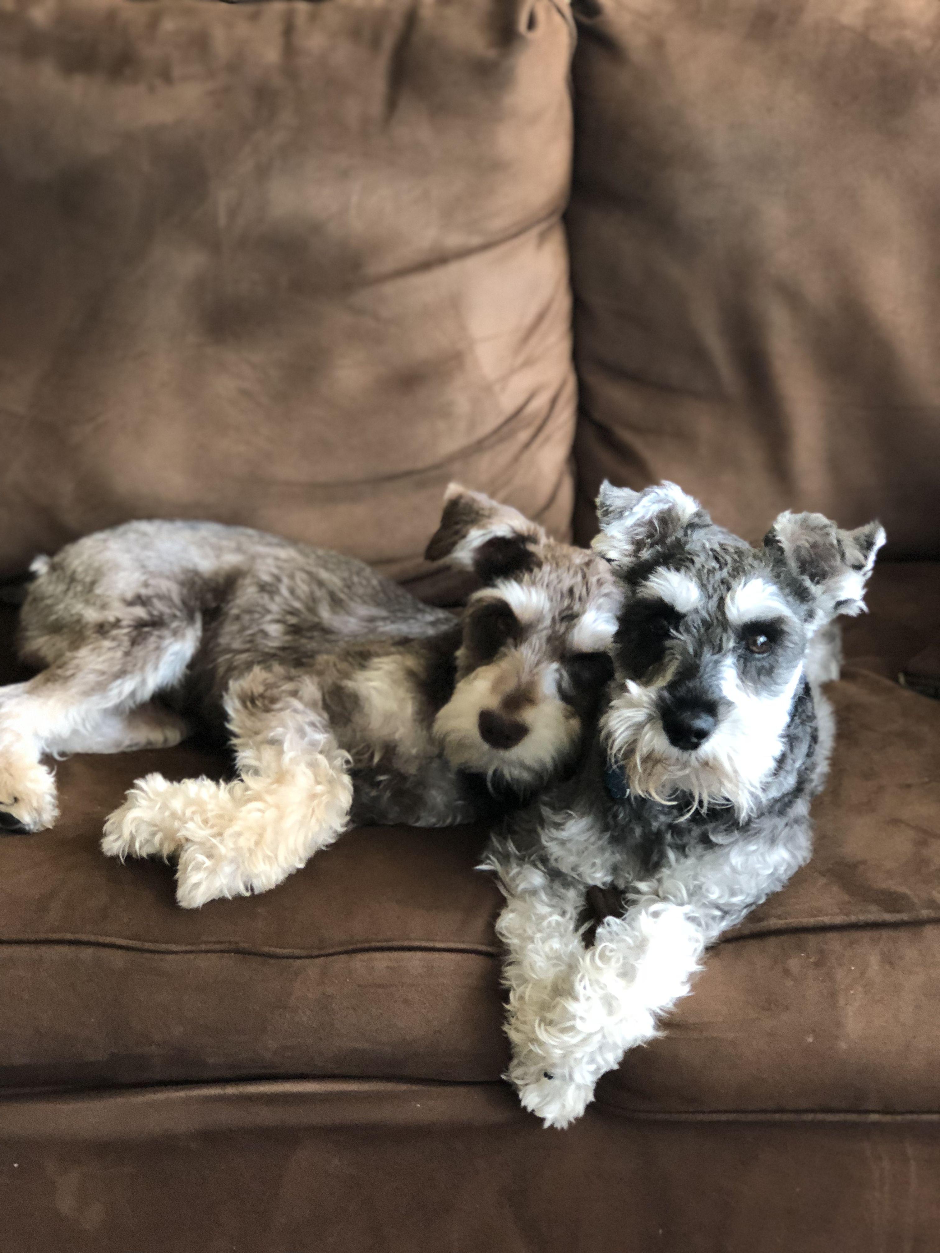 My Model Pups Virginia 2018 Pup Puppies Animals