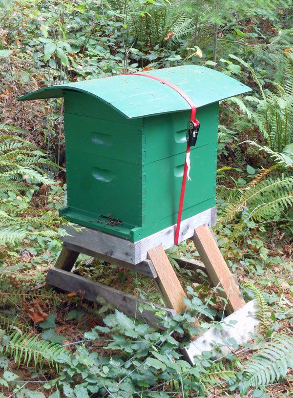 """I like to shelter my hives from the rain. A sheltered hive gives the bees a dry place to land and keeps rainwater from seeping in around the entrance."""