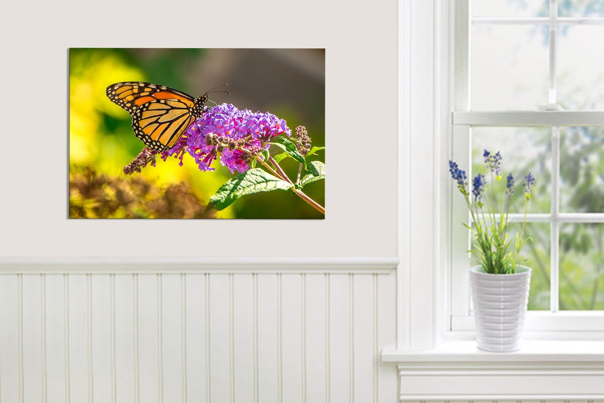 Monarch butterfly pinterest butterfly beautiful kitchen and