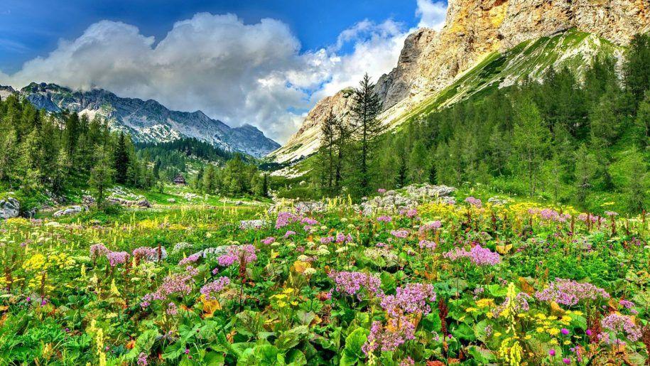Spring Beautiful Nature Nature Nature Photography