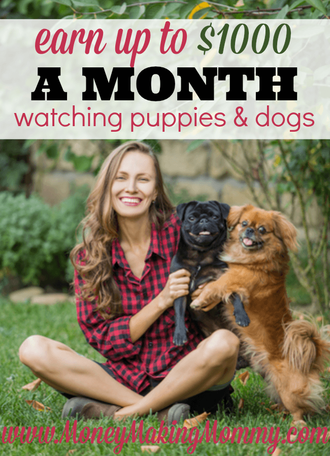 DogVacay Jobs [Get Paid to Play with Puppies!] | homework | Dog