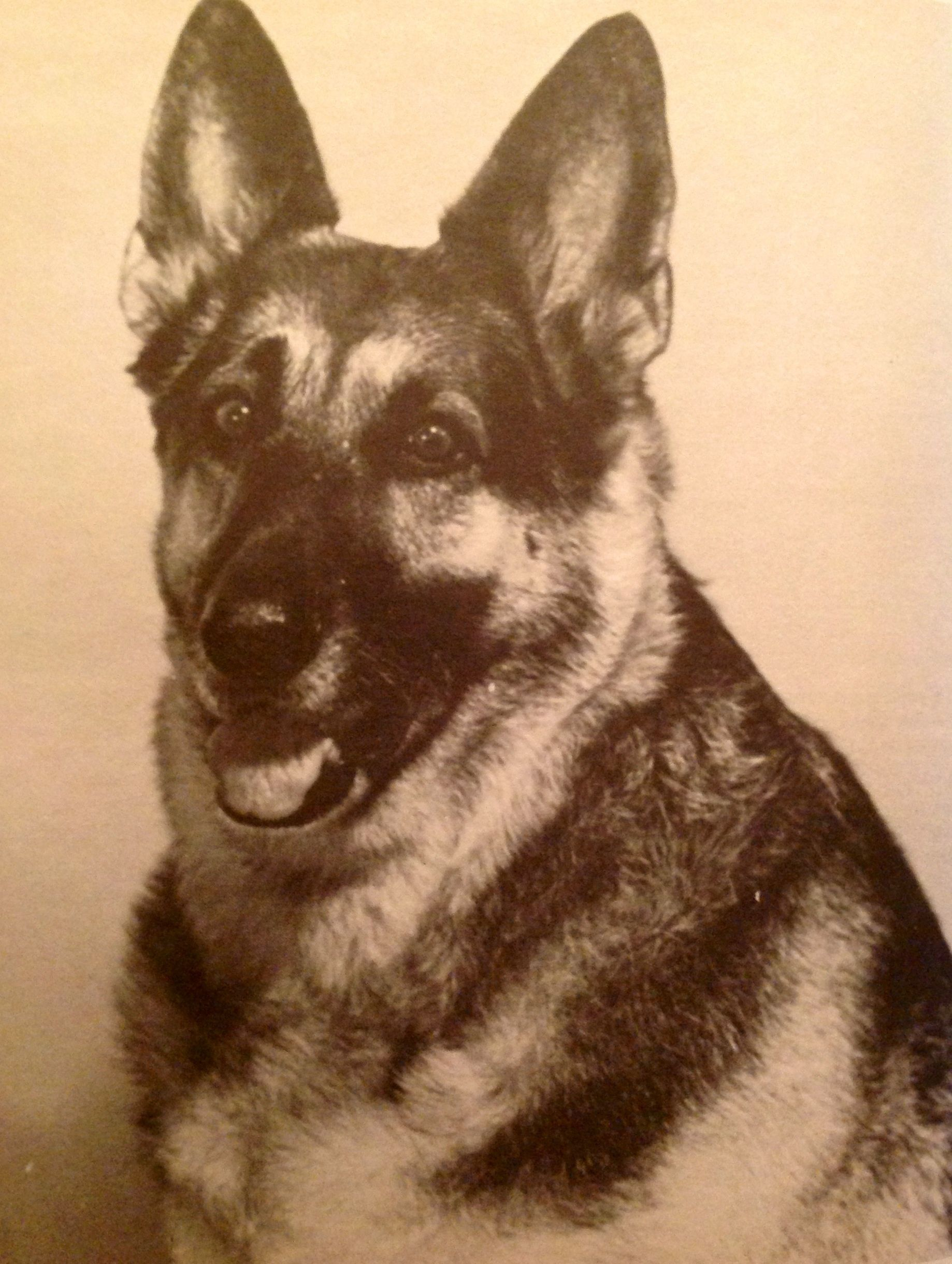 Vintage German Shepherd Print