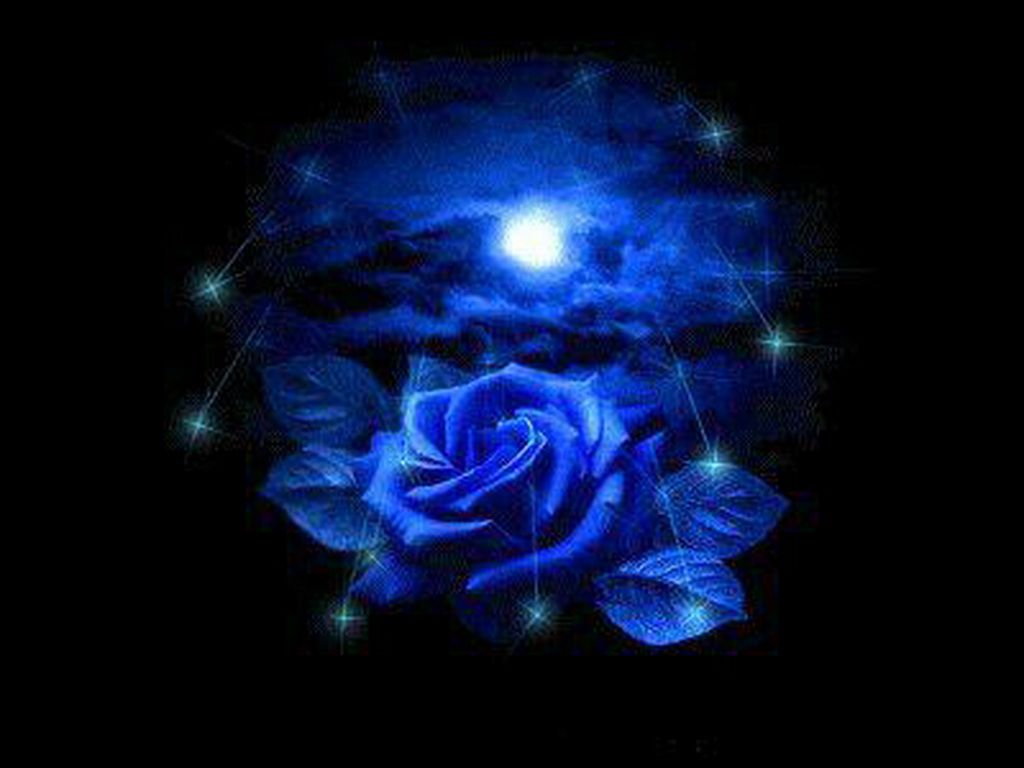 Blue Rose 4 You 3d Abstract Black Blue Leaves Rose Star 47021 Blue Roses Wallpaper Blue Roses Rose Wallpaper