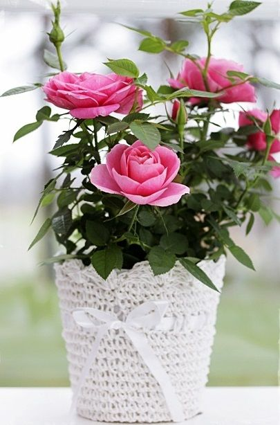 Found Several Darling Little Mini Rose Plants At The 99 Cent Only Store And Wrapped Up The Pots In Some Simple Croch Planting Roses Mini Roses Rose Plant Care