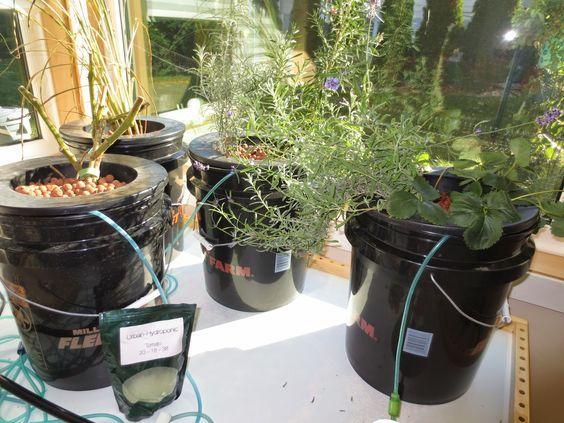 Hydroponics, Deep Water Culture, Soil Less Gardening, High Tech Gardening,  Hydrocorn,