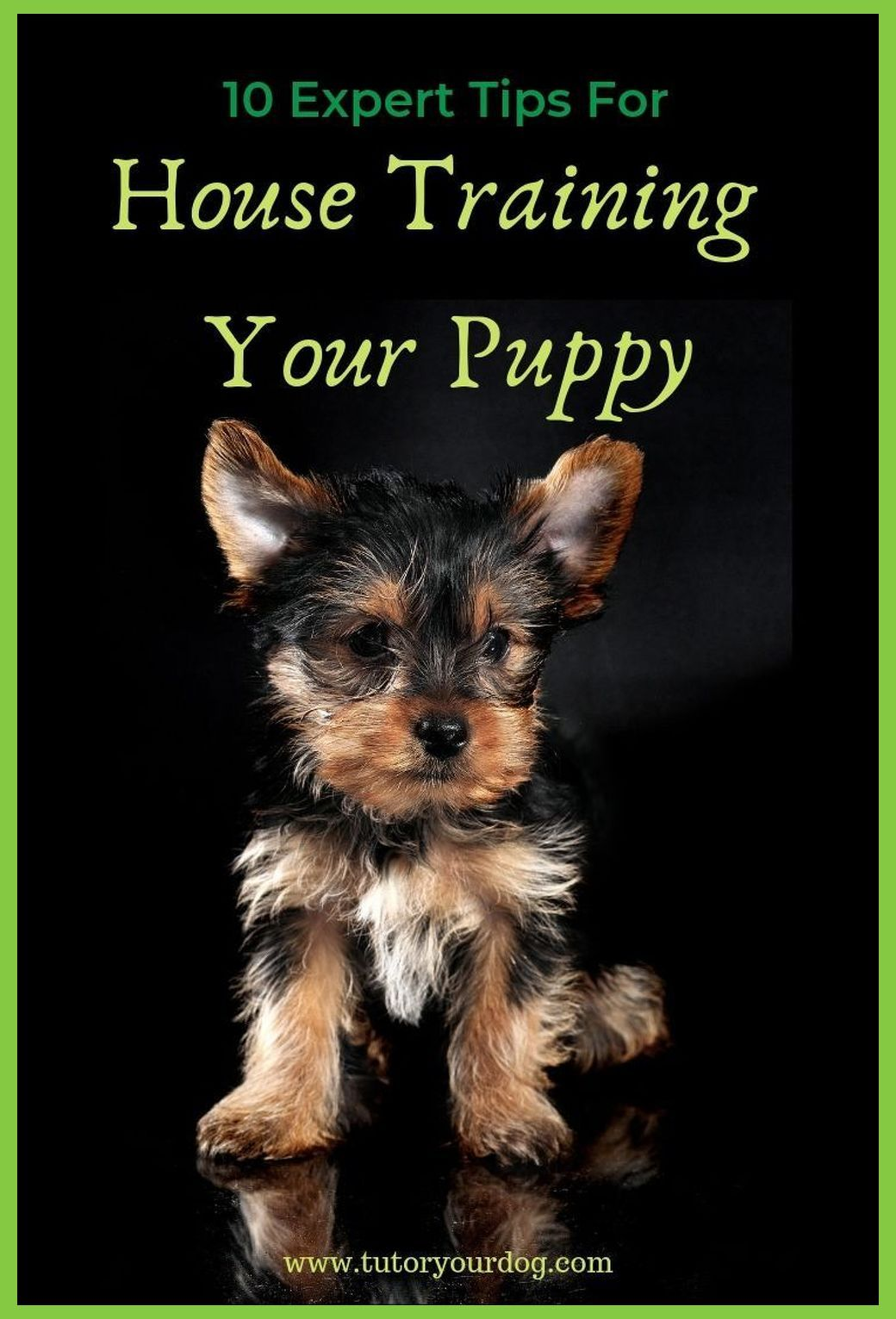 Pin On Stop Puppy Biting