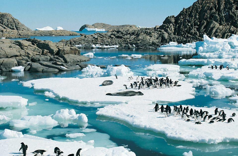 Image result for Summer start in Antarctica