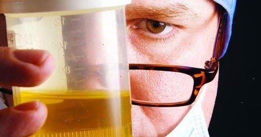 Cualquiera que haya tenido alguna vez una infección urinaria puede decir que no sólo es dolorosa, sino también molesta. Una de cada 5 mujere...