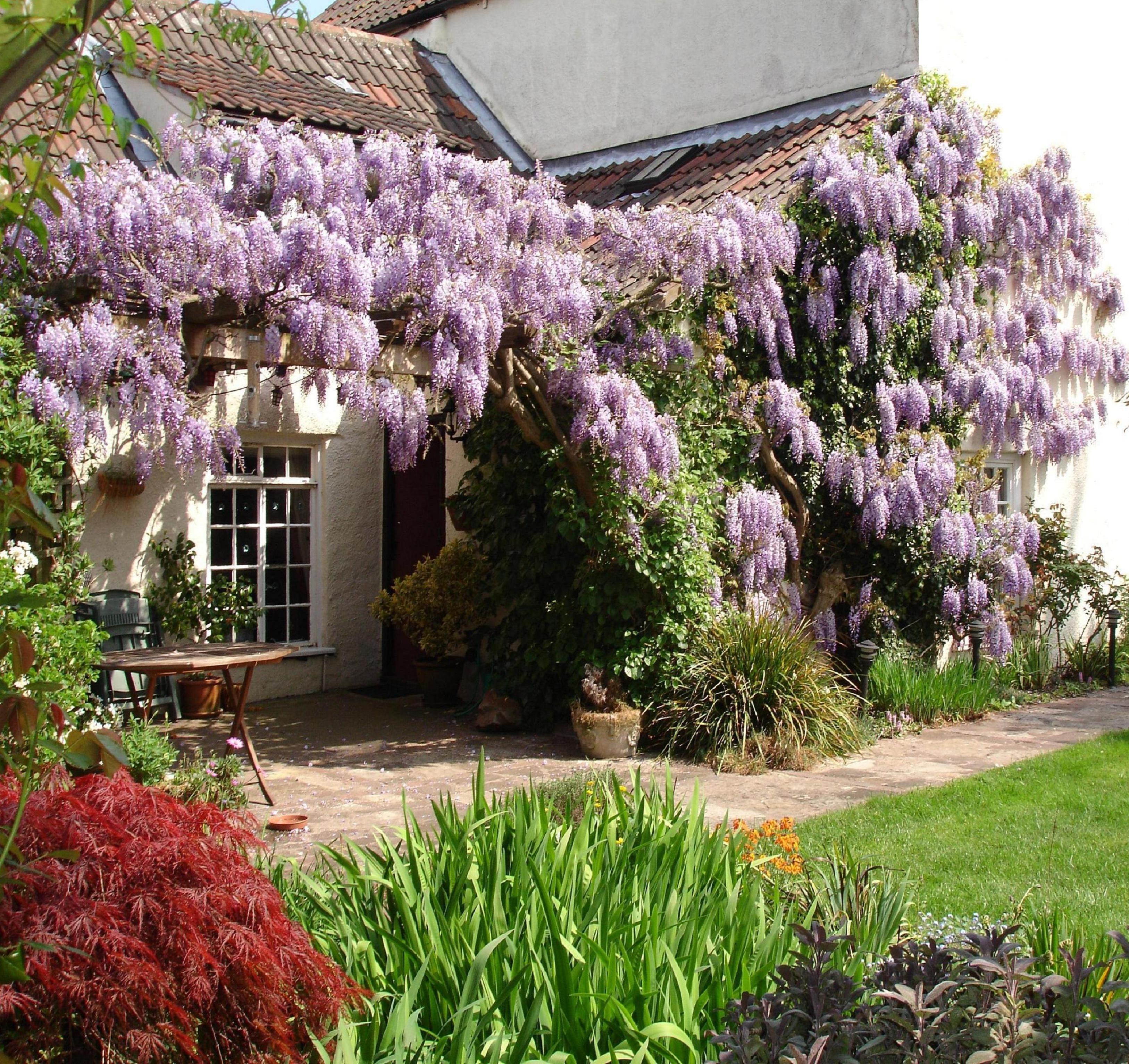 Detail From A House In Bristol U K Plants Bristol Uk Bristol